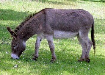 old donkey crane